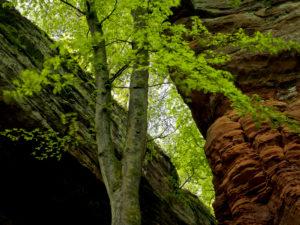 "Germany, Rhineland-Palatinate, nature reserve Palatine wood, Eppenbrunn, ""Altschlossfelsen"" from new red sandstone"