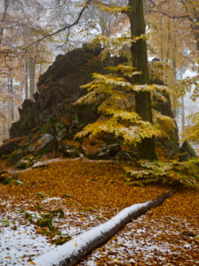 Europe, Germany, Hesse, Siegbach, Lahn-Dill-Bergland Nature Park, snow in the autumn forest at the Wilhelmsteinen