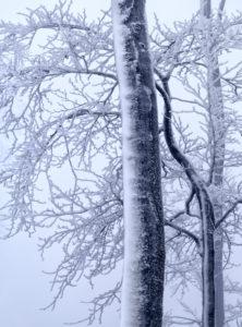 Europa, Deutschland, Hessen, Naturpark Lahn-Dill-Bergland, Winterstimmung mit Schnee, Raureif und Nebel im Schelderwald bei Siegbach