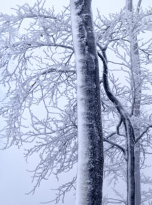 Europe, Germany, Hesse, Lahn-Dill-Bergland Nature Park, winter mood with snow, hoarfrost and fog in the Schelderwald near Siegbach