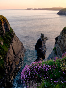 Europe, Great Britain, UK, Wales, Pembrokeshire Coast National Park, cliffs at St. David's Head, evening vistas, grasslands, beach carnations