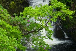 Great Britain, Wales, Cambrian Mountains, Mynach Falls waterfall at Devils Bridge