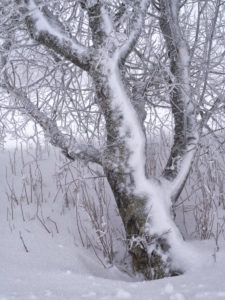 Europa, Deutschland, Bayern, Naturpark Bayrische Rhön, UNESCO-Biosphärenreservat Rhön, Weidenbaum im Raureif auf der Langen Rhön