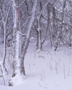 Europa, Deutschland, Bayern, Naturpark Bayrische Rhön, UNESCO-Biosphärenreservat Rhön, Weidenbäume im Raureif auf der Langen Rhön