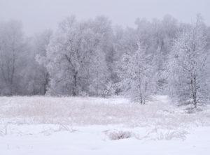 Europa, Deutschland, Bayern, UNESCO-Biosphärenreservat Rhön, Naturpark Bayrische Rhön, Naturschutzgebiet Schwarzes Moor