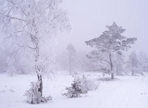 Europa, Deutschland, Bayern, UNESCO-Biosphärenreservat Rhön, Naturpark Bayrische Rhön, Naturschutzgebiet Schwarzes Moor, Birken und Kiefern in Nebel und Raureif