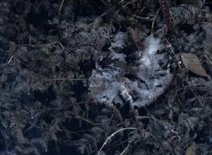 Europa, Deutschland, Hessen, Marburger Land, absterbendes Seerosenblatt zwischen Wasserfeder