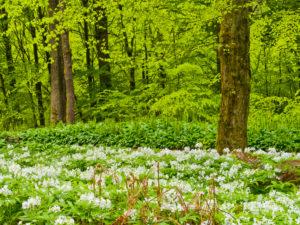 Europe, Germany, Hesse, Marburg, botanical garden of the Philipps University, spring forest