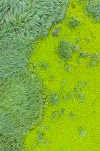 Europa, Deutschland, Hessen, Ederbergland, Naturpark Nationalpark Kellerwald-Edersee, Seggengräser in den Ederauen bei Herzhausen
