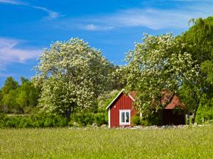 Europa, Schweden, Smaland, Insel Öland, Schwedenhäuser bei Algutsrum, blühende Bäume