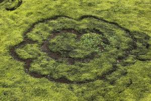 Iceland, heart shaped Iceland moss