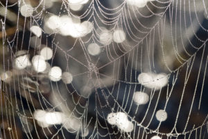 cobweb with dewdrop, close up