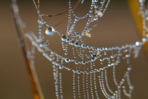cobweb with dewdrop, close up