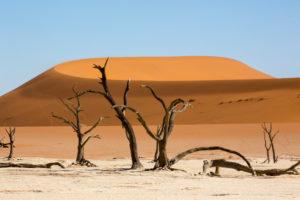 Dead trees in the Deadvlei, near the Sossusvlei, Namib desert, Namibia