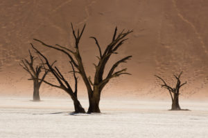 Dead trees in the Deadvlei, near the Sossusvlei, Namib desert, Namibia
