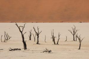 Abgestorbene Bäume im Deadvlei, in der Nähe des Sossusvlei, Namibwüste, Namibia