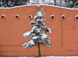Colorado, Manitou Springs, snow-covered tree in front of adobe architecture