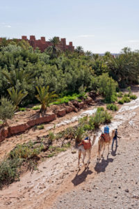 Ait Benhaddou, man with 2 camels, Morocco, animals, architecture