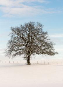Baum in einsamer Schneelandschaft
