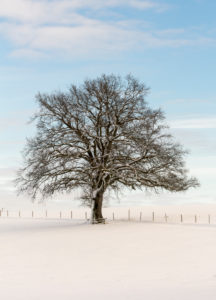 Tree in lonesome snowscape