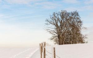 Bäume in einsamer Schneelandschaft