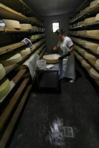Die Sennerin verarbeitet frische Milch zu würzigem Alm-Käse, Die Lagerung und Reifung im Keller,