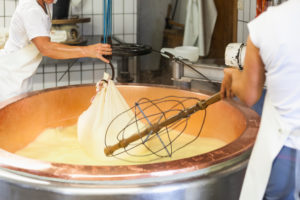 dairymaid porcesses fresh milk to aromatic alp cheese, the cheese curd is lifted out of the bowl and is processed to a loaf,