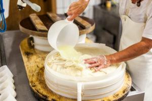 Die Sennerin verarbeitet frische Milch zu würzigem Alm-Käse, der Käsebruch wird aus dem Kessel gehoben und zu einem Laib weiterverarbeitet,