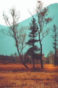 Bäume in herbstlicher Landschaft,