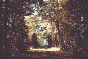 A forest road between trees in the autumn light,