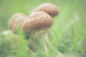 Eine kleine Familie Pilze im Herbst,