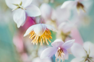 Small flowers coming out big - pastel colors, soft and romantic.