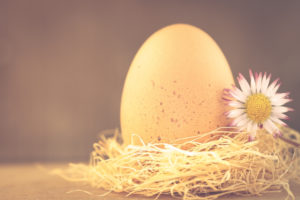 A chicken egg in the nest, Easter motive,