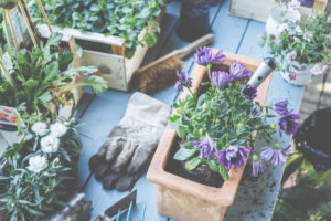 Plant the baskets in pots and baskets. Preparation for the gardening season.