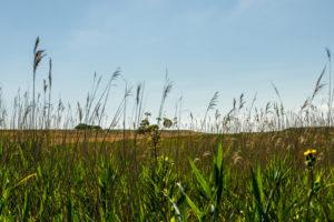 Blauer Himmel, Schilf, Gras und Sonnenschein bis zum Horizont.