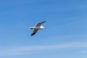 Eine Möwe fliegt am Blauen Himmel - Sinnbild für Urlaub und Erholung am Meer.