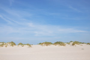 Reed and grass on the dune in Amrum, an island in the German North Sea - sand as far as the eye can see. Wittdün