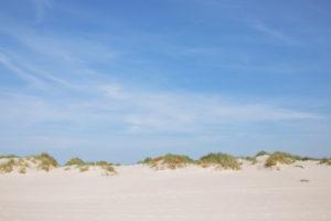 Schilf und Gras auf der Düne in Amrum, eine Insel in der deutschen Nordsee - Sand soweit das Auge reicht. Wittdün