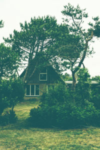 Behind the dike - a small house surrounded by mountain pines and pines in northern Germany, North Sea
