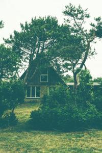 Hinter dem Deich - ein kleines Haus von Latschen und Kiefern umgeben in Norddeutschland,  Nordsee