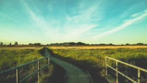 Gräser und Wiesen am Deich im Sonnenuntergang, St.Peter Ording, Nordsee, Wattenmeer