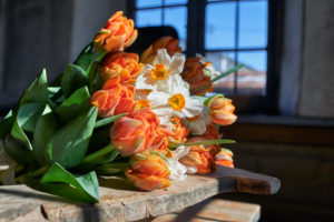 a bouquet of tulips and daffodils in the gardening on old wooden table