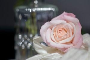 Rose in front of glass vase
