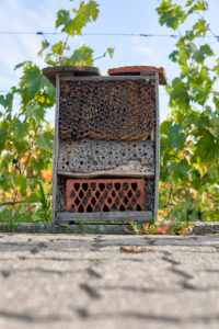 Insect hotel in front of grapevines