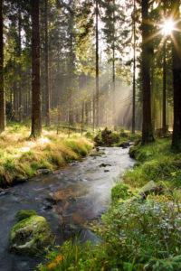 sunbeams, sun, river, Bode, trees, wood, summer, national park, Harz,