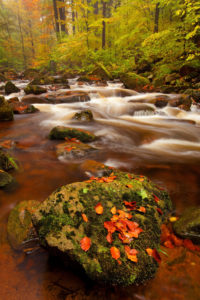Herbststimmung, Laubfärbung, Ilsetal, Nationalpark, Harz, nahe Ilsenburg