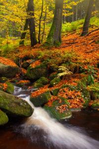 Herbststimmung, Laubfärbung, Wald, Fluss, Bode, Nationalpark, Harz