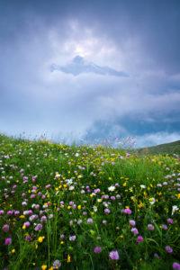 Blumen, Wiese, Grosses Wiesbachhorn, Berg, Wolken, Lücke, Alpen, Österreich