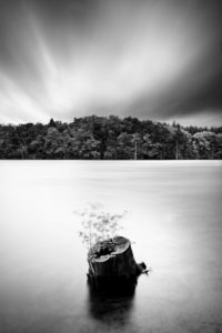 Long time exposure, lake, tree stump, trees, forest, clouds, b/w,
