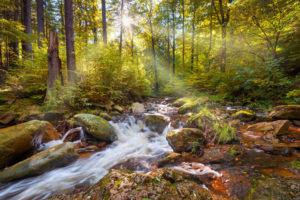 Ilse, Ilsetal, river, forest, sun, Harz, autumn, Saxony-Anhalt, Germany, Europe